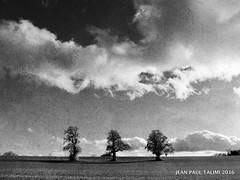 Sous les nuages (JEAN PAUL TALIMI) Tags: talimi noiretblanc nature noir nuages bourgogne france zen arbre arbres bw campagne texture lumieres silouettes