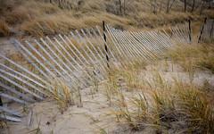 Snow Fence (mswan777) Tags: fence weathered dune grass michigan autumn nikon d5100 sigma 1020mm nature season beach snow