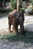 Hotel elephant (SteveInLeighton's Photos) Tags: transparency ektachrome thailand pattaya elephant 1983 april hotel chonburi
