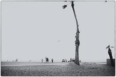 venice beach (live..simply) Tags: