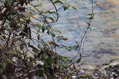 Río Jucar 2 (Ramón J. Martínez) Tags: imagen y sonido bosco imagenysonidobosco