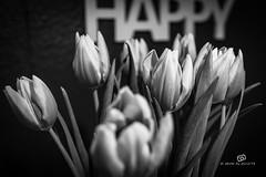 happy tulips (piri198) Tags: canon eos eosm eosm10 lightroom6 lightroom 22mm black white sw schwarz weiss schwarzweiss happy glücklich tulips tulpen blumenstraus