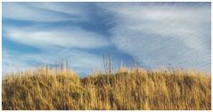 Grass and Sky, Dunbar (Gordon_Farquhar) Tags: dunbar west barns beach lothian ness lighthouse torness power station scotland scottish east coast