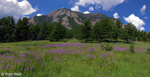 Photo - Bear Peak With Bee Balm or Wild Bergamot flowers - City of Boulder Open Space and Mountain Parks