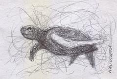 tortuga a lapicero (ivanutrera) Tags: draw drawing dibujoalapicero boligrafo animal tortuga turtle sketch sketching sea seaworld dibujo lapicero pen dibujoaboligrafo