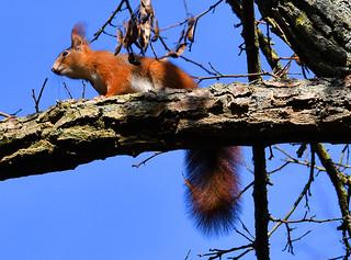 I love squirrels ;-)