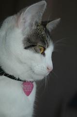DSC_5761 (judey) Tags: cats kitten twinkle