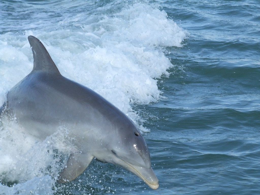 dolphin fun