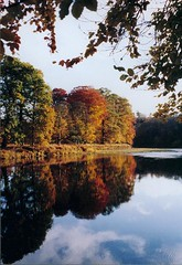 Tweed River reflection (billtam) Tags: autumn trees painterly reflection fall water colors beautiful river landscape scotland bravo colours branches scottish lovelovelove favourite borders helluva scottishborders tweedriver instantfave rnbtweed