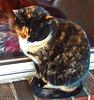 Catnap (dok1) Tags: cats pets catsinwindows catsandwindows