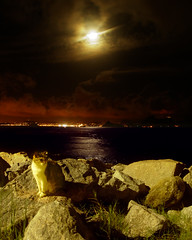 Gato ao Luar [Cat on a Moonlit Night] (Jim Skea) Tags: moon riodejaneiro nightshot gato noturna stray lua moonlight top20catpix aterrodoflamengo straycat luar flamengopark jimsk 130306 gatoderua duetos