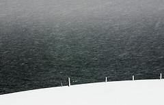 the white stuff (hkvam) Tags: winter white snow storm mrjackfrost wow iceland snowy snowstorm minimal snowfall blizzard sleet