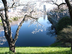2006.3.31 The air is full of spring (shinichiro*) Tags: 15fav flower color tree love japan 1025fav 510fav tokyo order sold 2006 jr 100v10f getty sakura cherryblossoms grdigital crazyshin iidabashi rm ichigaya grd 0331 exp028 colorphotoaward multimegashot ci3000100 85202052 2009may045 order500 order20101106 2009sold 200905sold