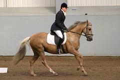 P7 (nick3216) Tags: uk horse caballo cheval mare unitedkingdom leah sunday cal quiron pferde cavallo cavalo hest hevonen paard 馬 palomino aprilfool häst dressage лошадь koń