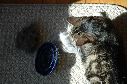 The Little Cat Brush That Could