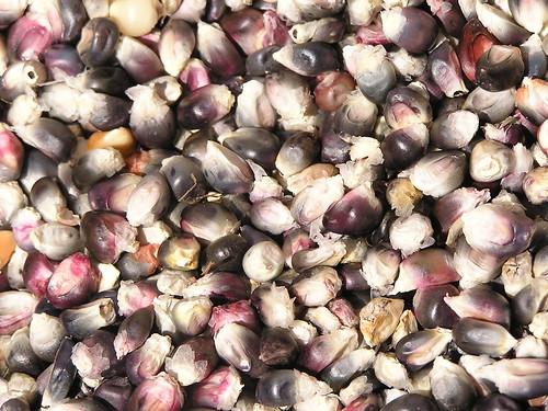 Criollo Corn
