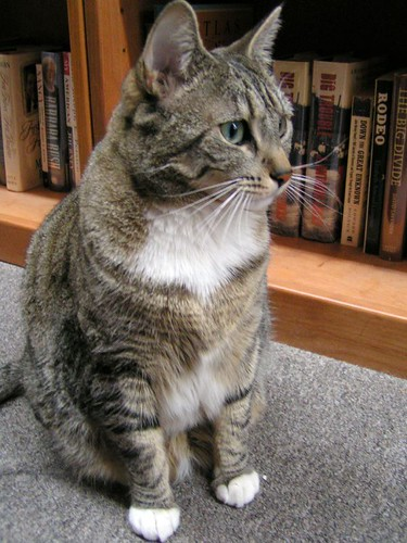 cute bookstore cat kitten pic