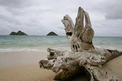Lanikai (CaptNali) Tags: driftwood