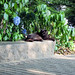 A cat in Hibiya Park