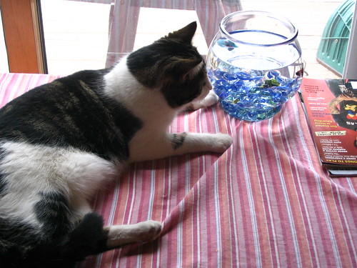 sonny and the fishbowl
