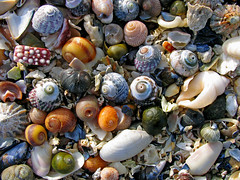 Shell pick 'n' mix, lightly arranged (lev) Tags: uk shells macro beach broken nature water colors coast scotland seaside interestingness sand colours stones patterns pebbles supermacro isleoflewis hebrides patterned hebridean mealabost melabost explore22april 3000v120f colorphotoaward canonshowcase theunforgetablepictures agreefee