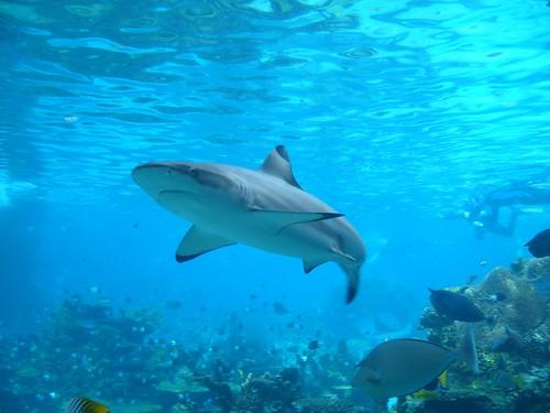 Shark SEO
