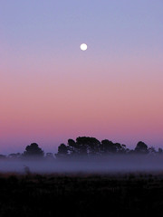 Misty Sunrise (oz_britta) Tags: moon sunrise ilovenature farm australia fcsetsrises