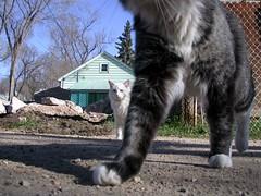 Walk like an Egyptian (Sheila Steele) Tags: freeassociation proud cat dance legs kos xsrjx devo lead sheilasteele caswellhill frizztext