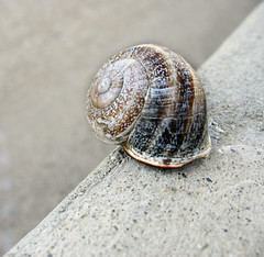Peering Over the Precipice (sbaracchina) Tags: shells house macro cute closeup canon spiral delete5 delete2 losangeles pod delete6 delete7 stripes snail save3 delete3 save7 save8 delete delete4 save save2 powershot sidewalk save9 save4 edge lookatme slug save5 save10 save6 curb chipped savedbythedeltemeuncensoredgroup precipice a610 peering minihouse curbside chitin
