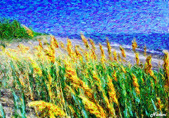 Beach Grass (nomm de photo) Tags: altered photoshopped digitalpainting paintinglike digitallyaltered reinnomm pictorialism neopictorialism paintedphotographs