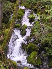 Pre Talapus Trail Creek