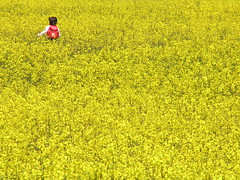 yellow field (tamaki) Tags: girl yellow japan rapeblossom coleseed rapeblossomsfield