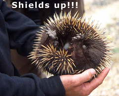 Shields up!!