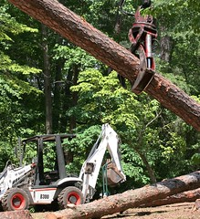 Please Please Don't Drop It (vtengr4047) Tags: tree up pine yard project log outdoor landscaping cut logging claw hoe stump cutting suburbs logger bobcat loader picking