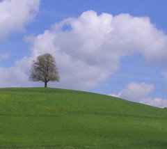Allgaeu - lonely tree (Heiko Brinkmann) Tags: blue sky 15fav nature clouds 510fav wow germany landscape deutschland 500v20f lovely1 hill meadow lonelytree lonelyobjects allgaeu 1on1landscapes pechtensweiler
