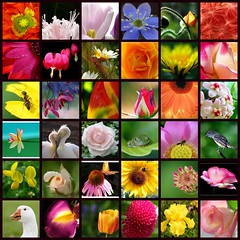 Turquoise's Mosaic - May 12th, 2006 (Turquoise Bleue) Tags: pink blue friends red green yellow fdsflickrtoys purple friendship mosaic turquoise mosaics artists tableau amiti impressionisme flickrs flickrsfriends turquoisebleue turquoisesmosaic promoteartists friendshiparoundtheworld afantasticstory amititraverslemonde