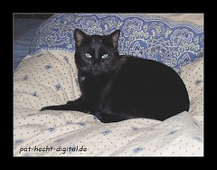 Black Beauty (# -  * - + P A T T Y + - * - #) Tags: cat kitten chat lazy gato katze faul lazycat ktzchen cmc felidae lazycats lovephotography commentonmycuteness feliden faulekatze faulekatzen