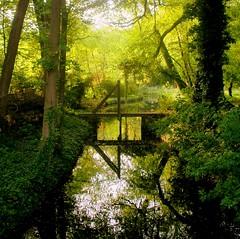 Walking the dog (Harry Mijland) Tags: park bridge trees light holland netherlands dutch bomen bravo utrecht ditch nederland explore parc sloot maarssen dearharry vechtenstein gtaggroup goddaym1 zandwegoostwaard harrymijland