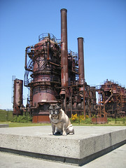 Pug With Gas Works - by zoomar
