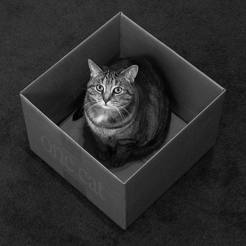 a box for every cat | Flickr - Photo Sharing!