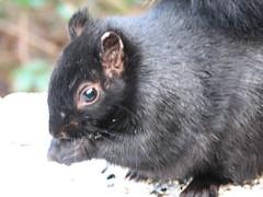 Little Squirrel (Jarett_M) Tags: photos example videocatalyst