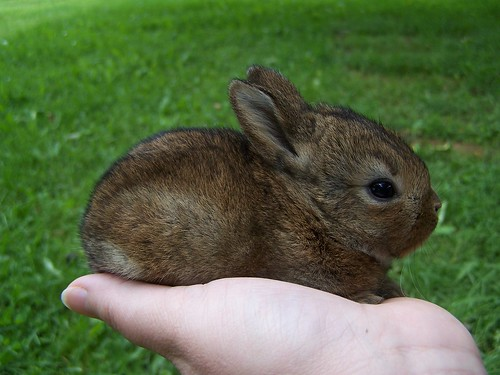 Baby Bunnies - Day 16
