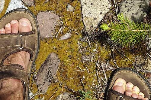 feet pine moss shoes toes hiking sandals needle sandal pineneedle