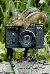 Boris the Chipmunk with his Zenit  ET camera (2)