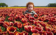 Amazing Tulips (s@ndra) Tags: flowers red tulips redhead littleboy kiss2 kiss3 outstandingshots kiss1 kiss4 kiss5 stuckmenageriegroup5 outstandingshotshighlight