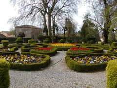 P1010145 (marcolandia72) Tags: flowers primavera spring lucca montecarlo tuscany villa fiori toscana carmignano