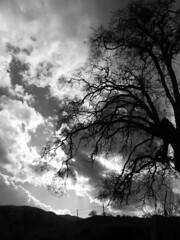 A Winter Lightscape (Megan Conlin (organicpixel)) Tags: 2005 california winter sunlight canon sunscape deleteit saveit saveit2 deleteit2 saveit3 deleteit3 deleteit4 deleteit5 deleteit6 deleteit7 deleteit8 deleteit10 deleteit9