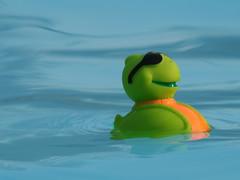 Turtle (Padrone) Tags: blue water toys turtle explore swimmingpool interestingness412 i500