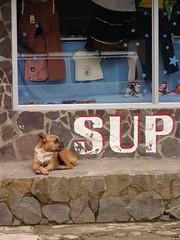 World's Most Photogenic Dog Monteverde, Costa Rica