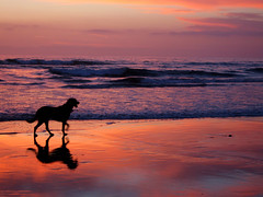 Dog in the Crimson Surf (Shari Diane) Tags: ocean sunset shadow sky orange dog beach coast interestingness sand solitude fv5 explore fv10 southerncalifornia interestingness245 i500
